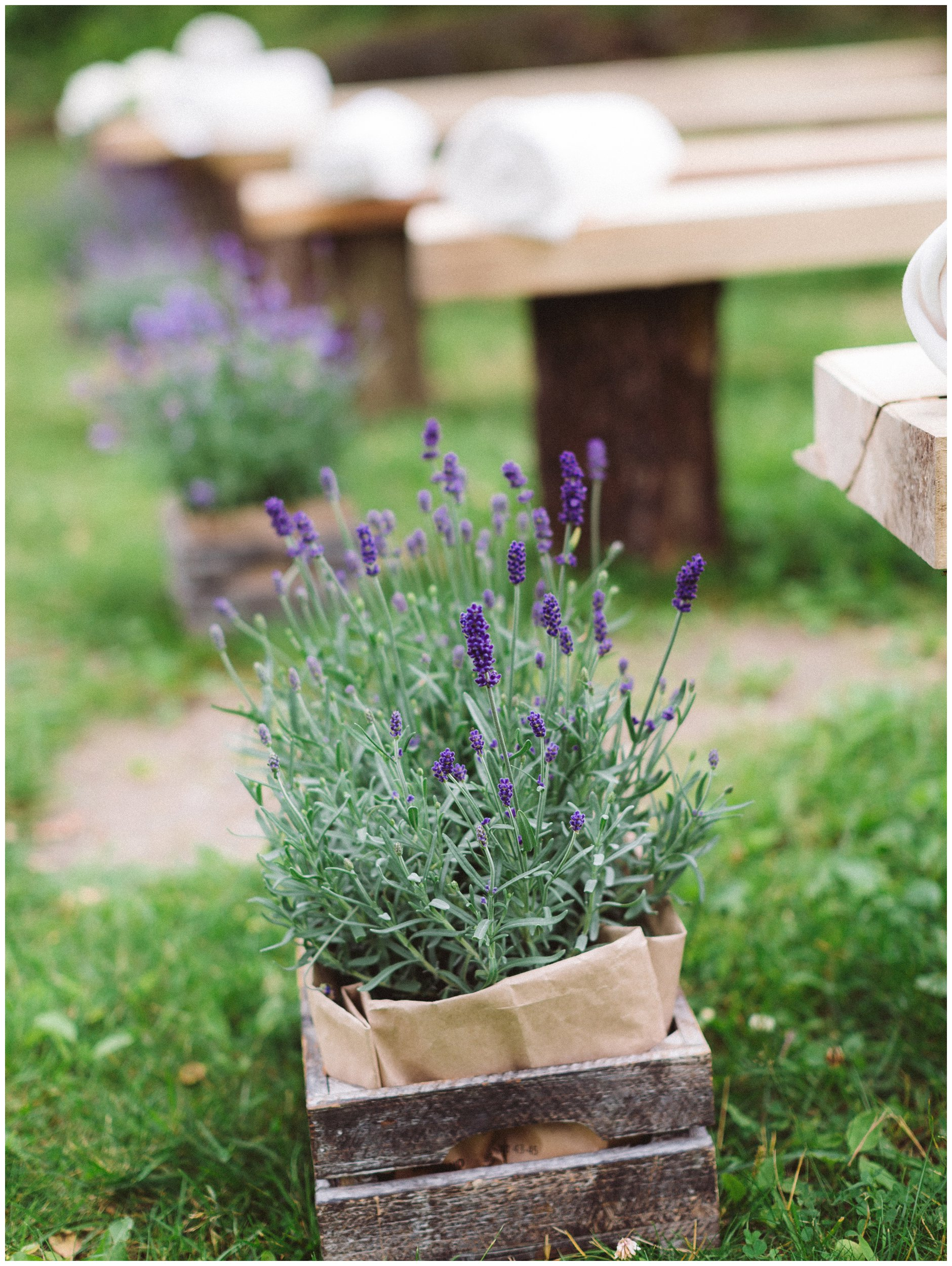 Lavendel i rustikk kasse utendørs vielse